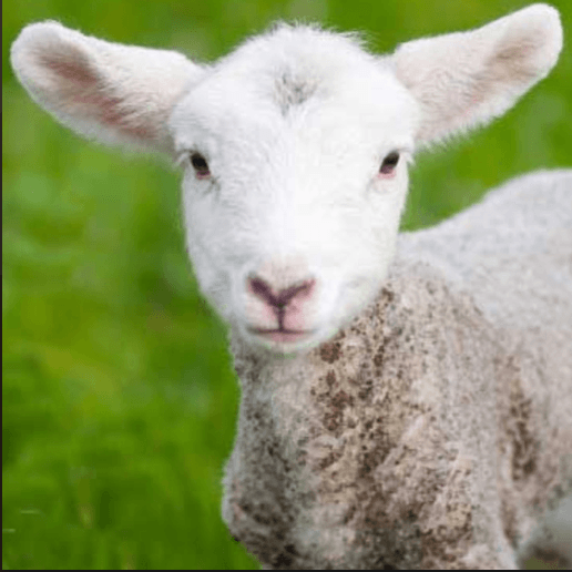 The Triumph of the Lamb Conference