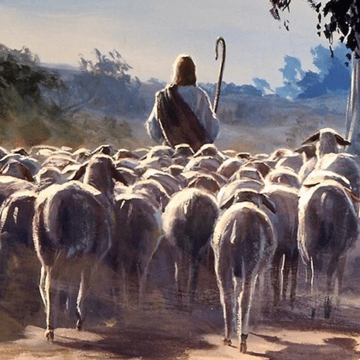 Watching God Be a Good Shepherd